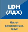 LDH / ЛДХ (Лактат дехидрогеназа)