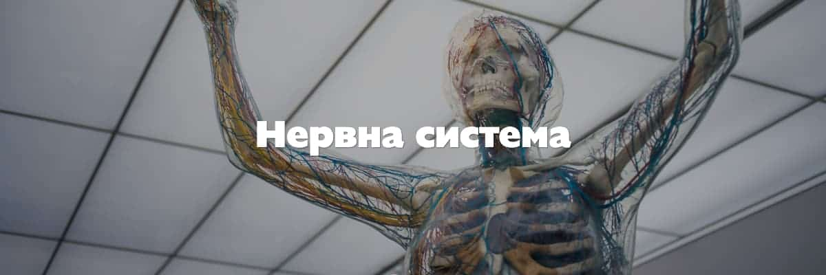нервна система