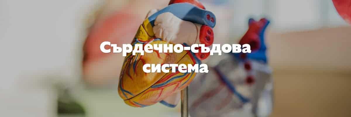 сърдечно съдова система